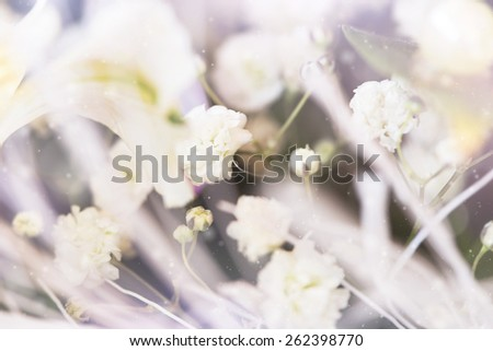 white delicate spring flowers  - stock photo