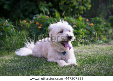 White dog lying in the garden