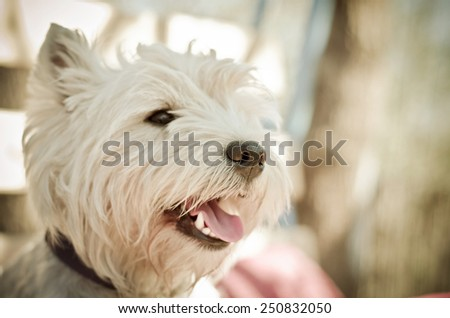 white dog muzzle close up - stock photo