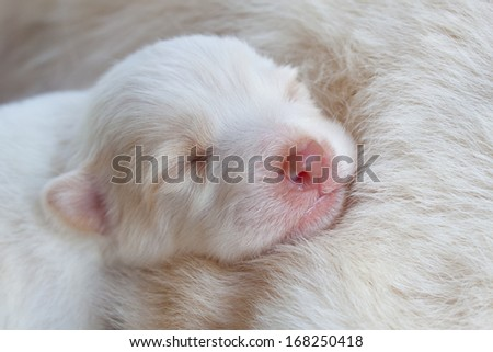 white dog newborn sleeping so cute