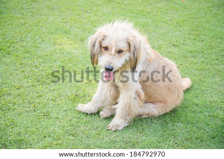 White dog on the green grass