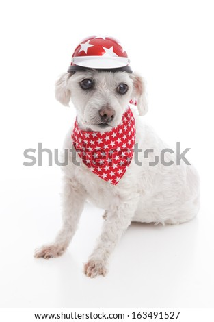 White dog wearing a bike helmet and red bandana with stars