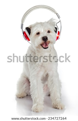 white dog with headphone isolated on white background. dog listening to music