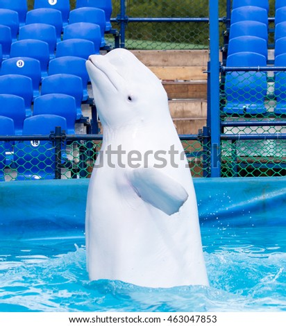 white dolphin in the pool