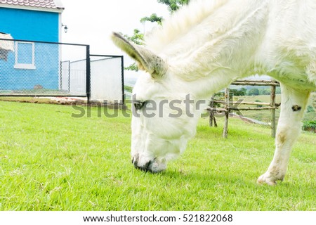 White donkey eating grass on slope floor.