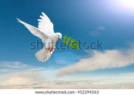 White Dove carrying leaf branch on blue sky background and international day of peace 2016