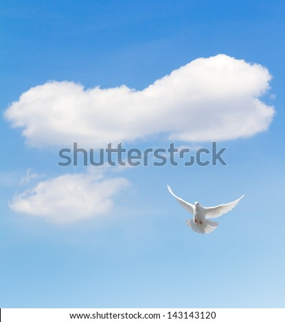 White dove flying in the sky. - stock photo