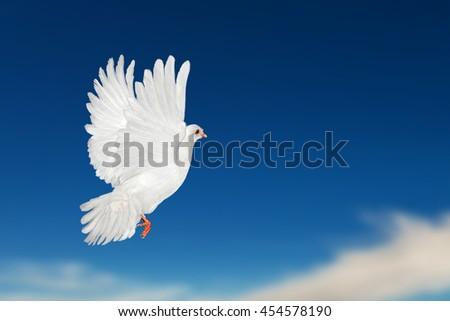 White Dove Flying on blue sky background - stock photo