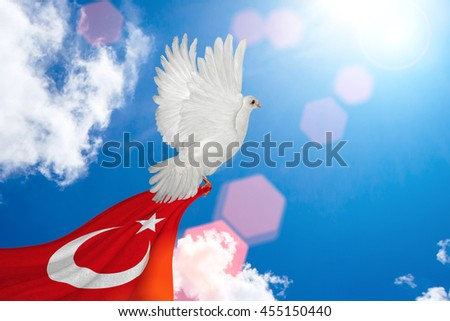 White Dove holding Turkey flag Flying on blue sky to independence and freedom concept - stock photo