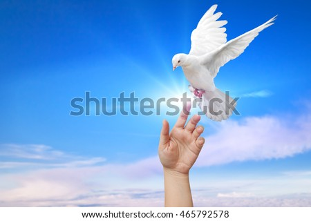White Dove out of the hand on blue sky background  and peace concept and clipping path and international day of peace 2016