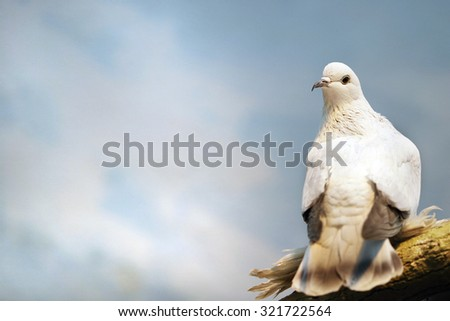 White Dove perches on the roof - stock photo