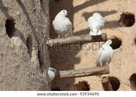 White doves at the pigeon tower in Doha, Qatar - stock photo