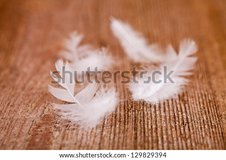 white downy feathers on rustic wooden background