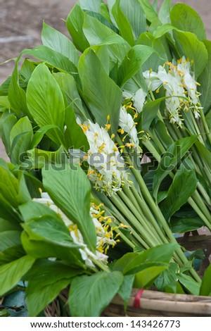 White dragon flower smithatris supraneanae globba stock photo white dragon flower smithatris supraneanae or globba winitii in kengtong central marketis mightylinksfo