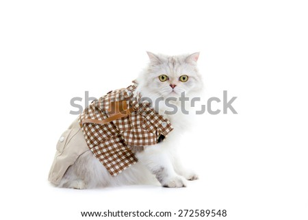 White dressing cat isolated on white background
