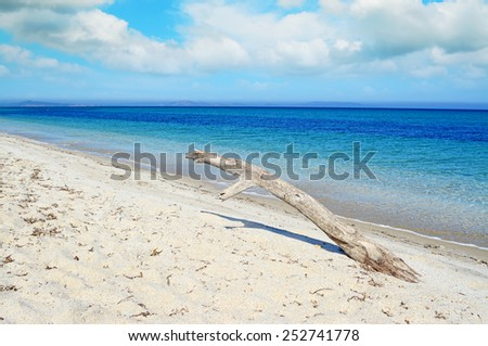 white driftwood in a tropical beach on a cloudy day. Shot in Sardinia, Italy - stock photo