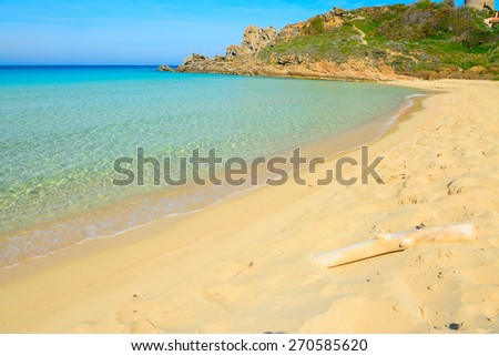white driftwood in Rena Bianca beach, Italy - stock photo