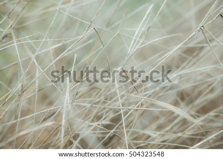 White, dry grass background