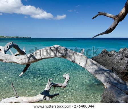 White dry wood branches reaching lava rocks at Beach 69, Waialea, Big Island - stock photo