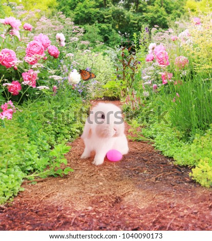 White Easter bunny rabbit with an Easter egg on a garden path lined with pink peony flowers and butterflies.