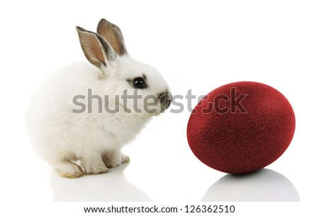 White Easter Bunny with red egg on white background - stock photo