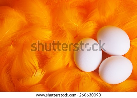 white eggs in soft and gentle feather nest - stock photo