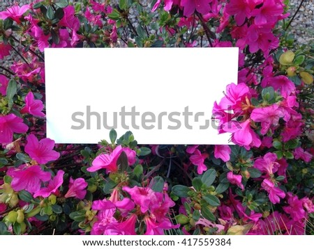 White envelope with empty space for your text and violet flowers of azalea rhododendron. Can be used like a invitation card.