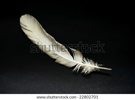 white feaether - stock photo