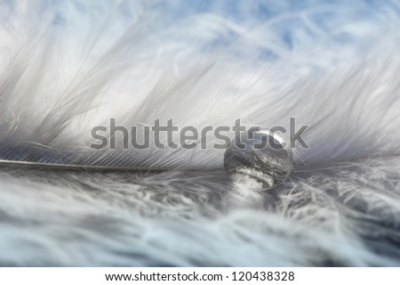 white feather and one dew drop - stock photo