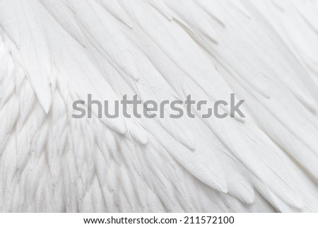 White feather background - stock photo