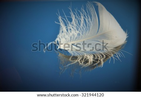 White feather of a bird on a blue background - stock photo