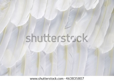 White feather of bird for background