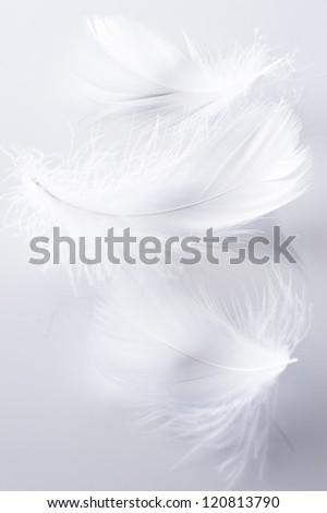 White feather of bird on gray background - stock photo