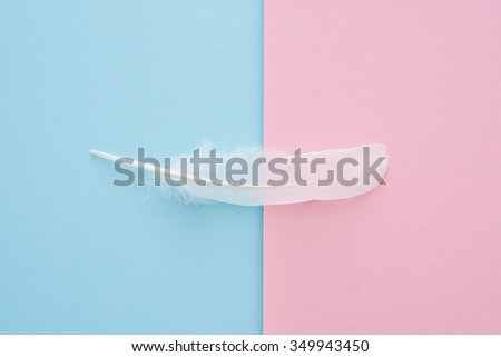 white feather on blue and pink paper background - trend colors