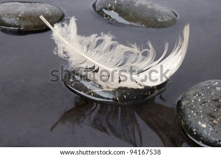 White feather on stone on black water background - stock photo