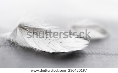 White feather with water drops on grey background