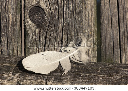 White feather with water drops on rustic wooden background. Retro toned image, shallow depth of field.