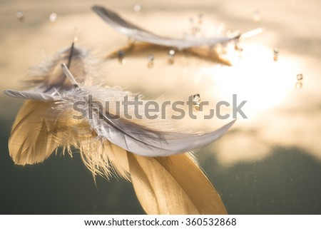 White feathers and transparent beads on the the gold mirror  - stock photo