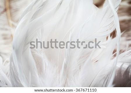 White feathers background - stock photo