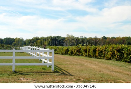 White Fence in an Orchard