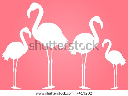 white flamingoes with pink background - stock photo