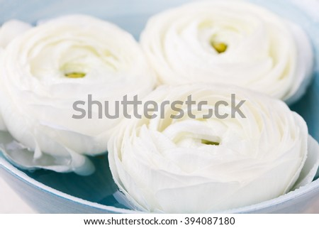 White floating ranunculus flowers. Spa wellness background Copy space - stock photo