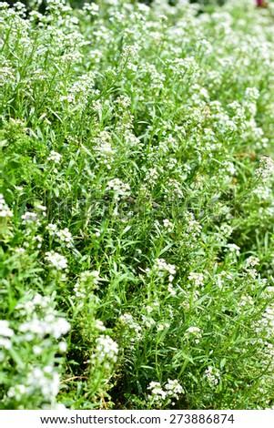 White flower - stock photo