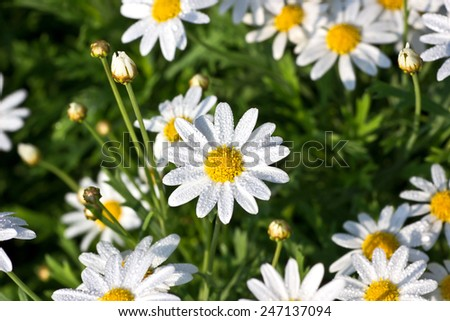 White flower beautiful in nature close up. - stock photo