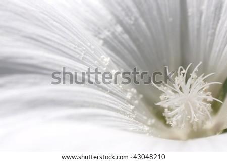White flower close up - stock photo