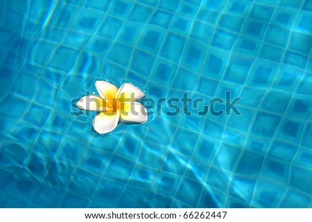 White flower floating on the water in the pool