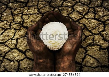 White Flower in Cracked Earth - stock photo