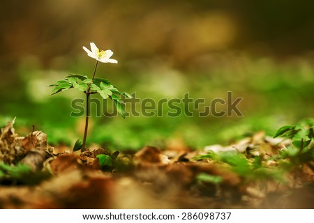 white flower in forest