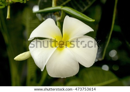 white flower in garden