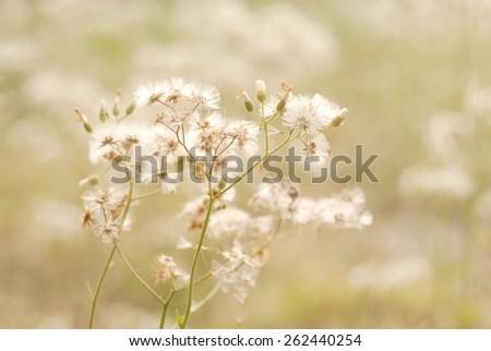 white flower in soft focus - stock photo